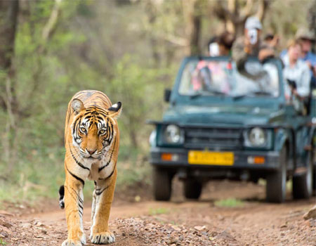 Golden Triangle Tour with Ranthambore National Park