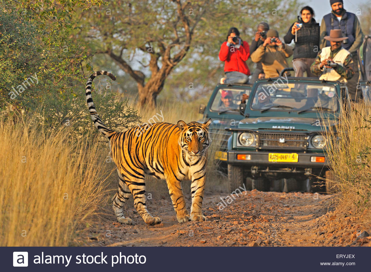 Tiger with Golden Triangle Group Tour