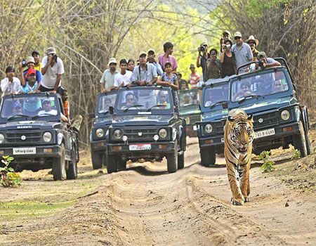 North India Wildlife Cultural Tour