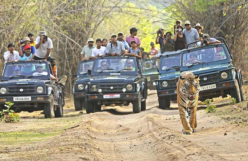 Delhi Ranthambore weekend Tour